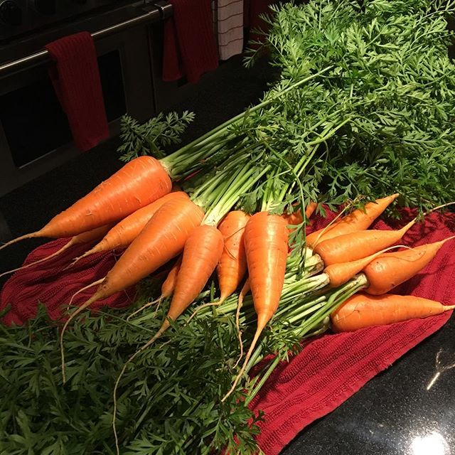 Fresh from our garden! #hartgallerytn #hartgarden #freshfood